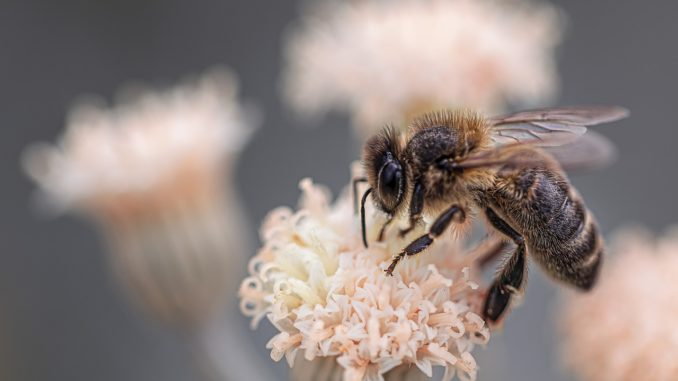 Artensterben bedroht Lebensgrundlage des Menschen